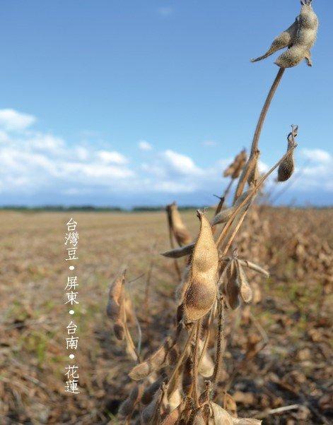 豆油伯產地